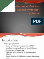 Protection of Penaeus monodon  against white spot syndrome.pptx