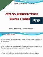 4 - Ciclos reprodutivos 1