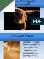 Relación y Coordinación.Juan Carlos 6ºA.