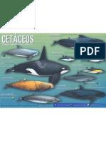 Cetaceos Mediterraneo_1 de 2