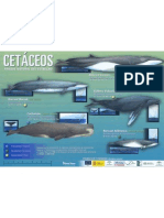 Cetaceos Mediterraneo_2 de 2
