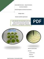 Capacidade de regeneração do Sphagnum Palustre quando exposto a condições extremas