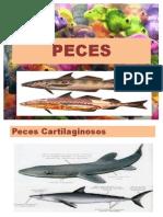 PECES 2