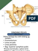 SP Pelvis Anatomi