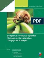 Gorgojo Del Eucalipto CONAF