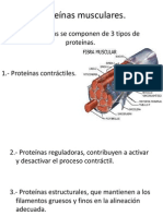 Proteínas musculares