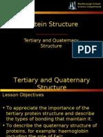 Protein Tertiary