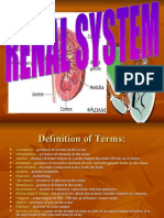 Renal System.mants