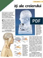 Activitati Ale Creierului