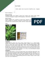 Eurycomae Longifoliae Radix Afrodiasiaka