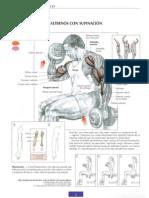 Compendio Musculacion I