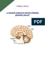 MARIELALERO, GLÀNDULA PINEAL.pdf