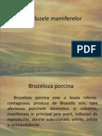 Brucelozele mamiferelor