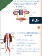 eliminação renal