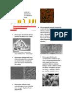 P1 Biocel