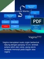 Anfisma.vagina