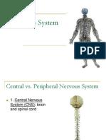 human nervous-system