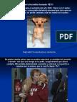 Un perro llamado FÉ