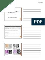 Citologia-e-Fisiologia-da-célula-bacteriana