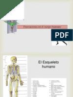 Desviaciones en El Cuerpo Humano