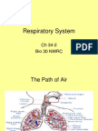 34-2 Respiratory System.ppt