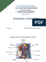 1 anatomía y fisiología renal