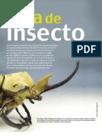 Vida de Insectos (cómo Ves)