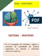 sistemanervioso-100622222249-phpapp01