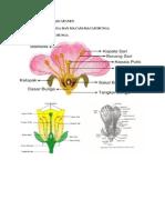 bunga (bagian-bagian dan macam-macam bunga).docx