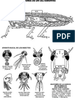 Insectos-SALTAMONTES