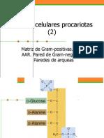 Pared Procariotas 2