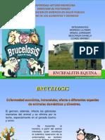 Fondo de Brucelosis FINAL
