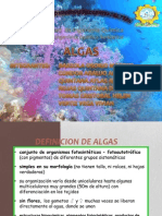 Definicion de Algas