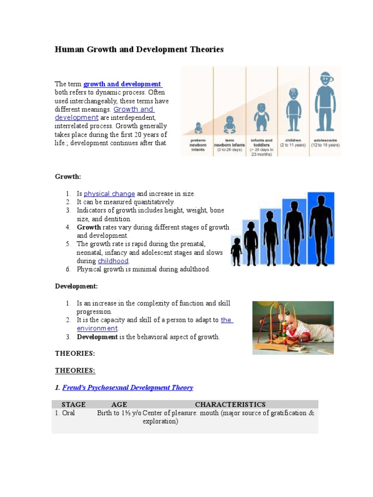 human growth development through the life stages essay