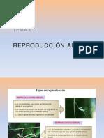 Tema 9. P Reproduccion Animal