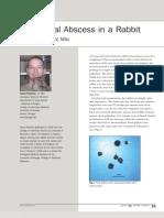 Abdominal Abscess in a Rabbit[1]