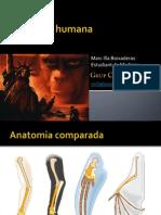 Marc Evolucio