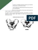 OSTEOLOGIA FORENSE