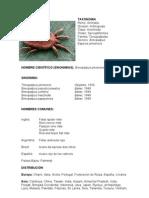 Brevipalpus phoenicis ESPAÑOL