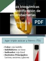 11 Pruebas Bioquc3admicas de Identificacic3b3n de Enterobacterias