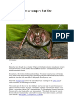 Why You Want a Vampire Bat Bite