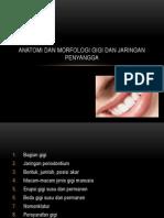 Anatomi Morfologi Gigi-SH (Rev 12.09)