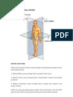 Posisi Anatomikal or Satah