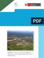 Análisis económico de las actividades causantes de la deforestación en Pichis-Palcazú