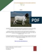 PDF Razas Ovinas