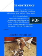 Bovine Obstetrics 1