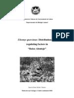Eliomys quercinus