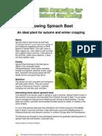 Spinach Beet 1709