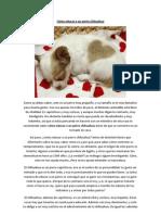 Cómo educar a un perro chihuahua