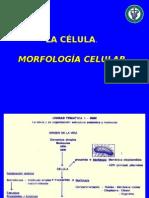 Morfo_cel_2010